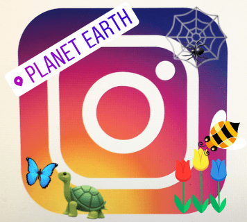 Just how to include sticker labels or emojis to Instagram tales