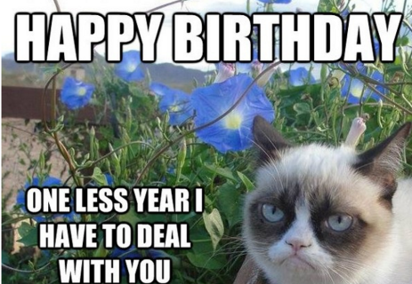 Where to discover amusing birthday celebration memes