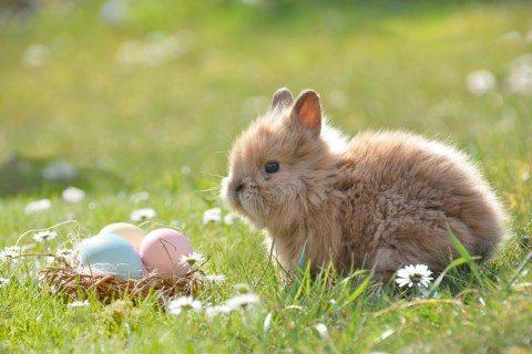 Finest Easter Captions – Rabbit Event