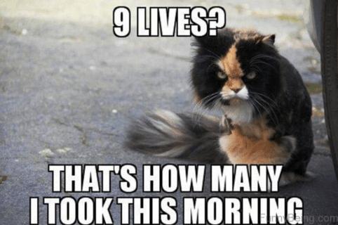 Ideal memes of perpetuity – Autotak