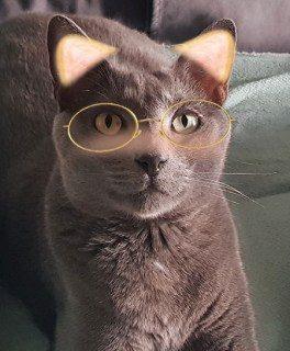 Finest feline meme online – Autotak