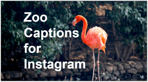 134 subtitles for Instagram for the zoo